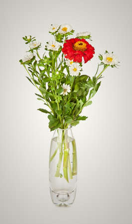 Bouquet from red daisy-gerbera and white aster in glass vase  Stock Photo