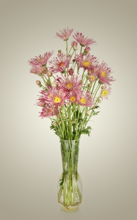 Beautiful flowers in vase Stock Photo