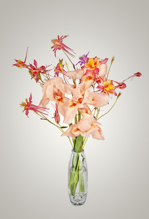 bouquet of spring pink Iris flowers in a vase photo