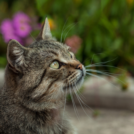 Cat outside with a Fall color background  Tight depth of field, highlighting the cat photo