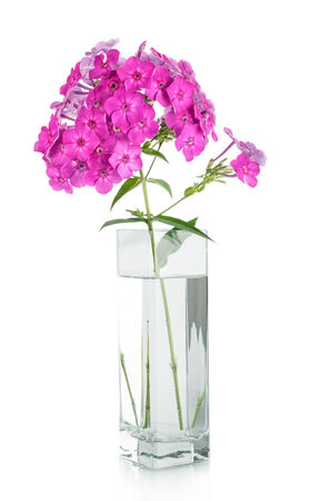Bouquet of pink carnations in vase isolated over white photo