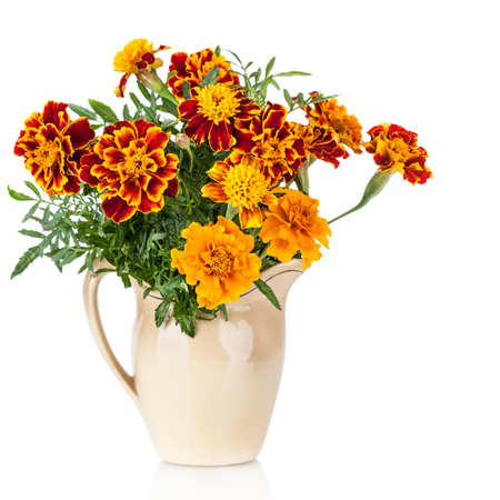 tagetes: Flowers of Saffron  Tagetes  bush - used as a spice and medicinal plant- in ceramic jug  Isolated on white background