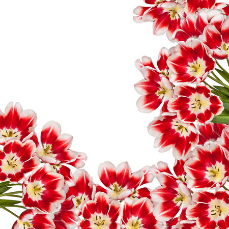 Beautiful red tulips flowers bouquet background Stock Photo