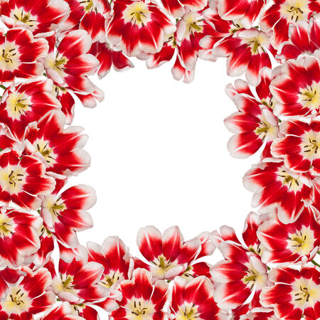 matherday: Beautiful red tulips flowers bouquet background Stock Photo