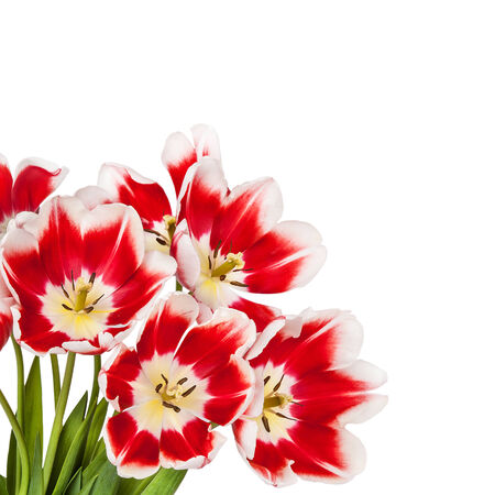 matherday: Beautiful red tulips flowers bouquet Stock Photo