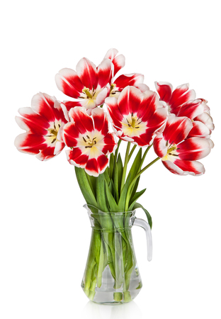 matherday: Beautiful red tulips flowers bouquet in vase isolated on white background
