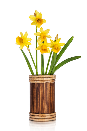 matherday: Beautiful Yellow Daffodils flowers in vase isolated on white background