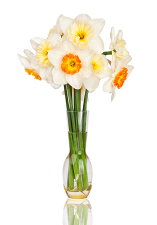 Beautiful yellow and white daffodils in transparent vase isolated  Narcissus photo