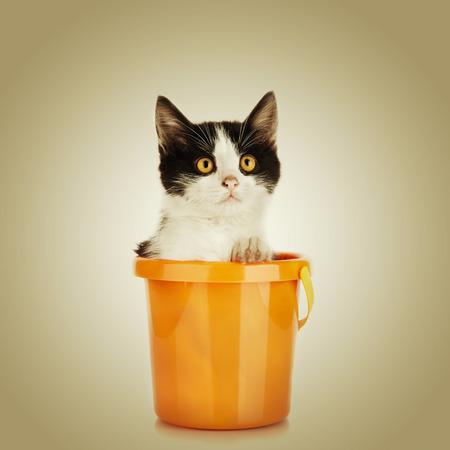 Little kitten. Cat sitting in bucket Stock Photo