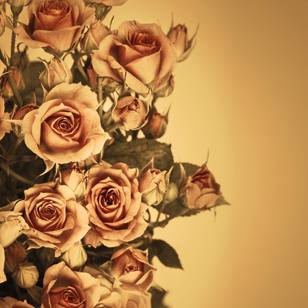Beautiful Roses Bouquet Flowers Background Imagens