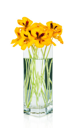 beautiful bouquet of nasturtium flowers in a vase Stock Photo