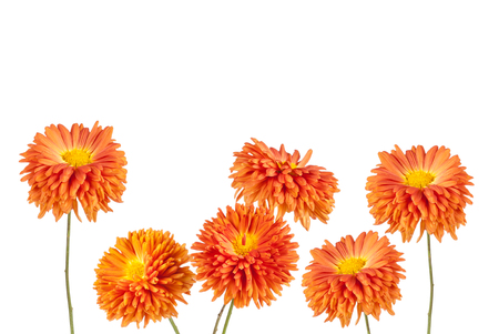 aster: Flowers background. Aster