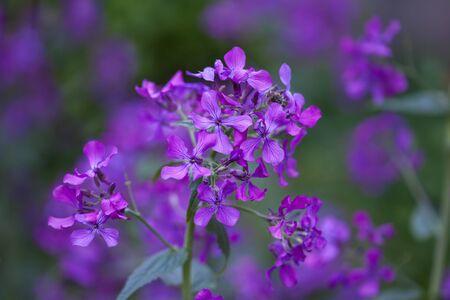 fields of flowers: Beautiful spring flowers Stock Photo