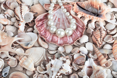 Seashells and pearls as background. Sea shells Stock Photo