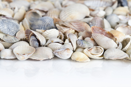 Sea shells. Mixed colorful seashells as background Stock Photo