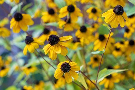 Beautiful yellow flower in the garden. Nature