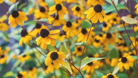 Beautiful yellow flower in the garden. Nature 版權商用圖片 - 131957297