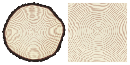 rings on a tree cut: Vector colour saw cut pine tree trunk and tree rings background