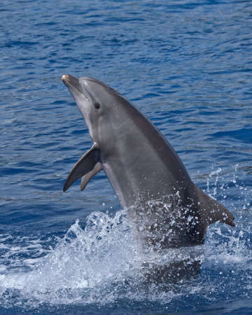 Dolphin standing photo
