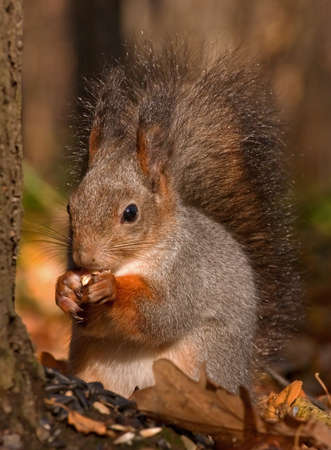 Dinnertime in the autumn forest