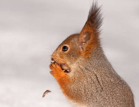 Close-up of eating squirrel photo