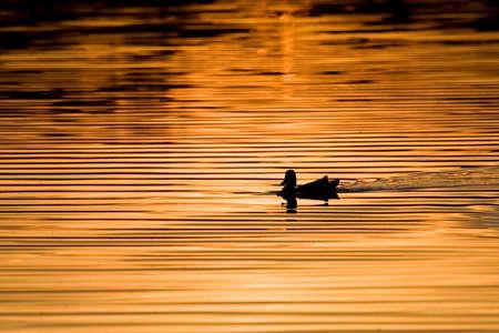 glistening: Golden lake Stock Photo