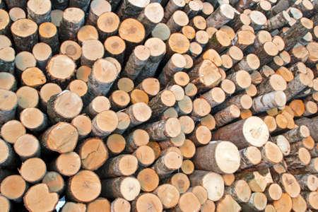 Birch logs on the logging