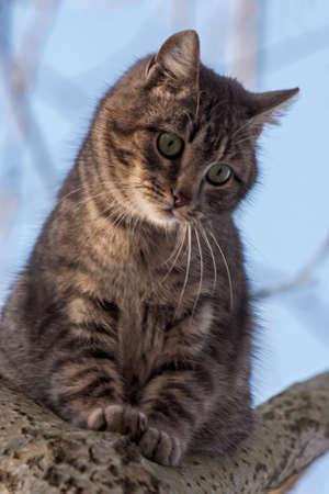 Tabby cat sitting on the tree Reklamní fotografie