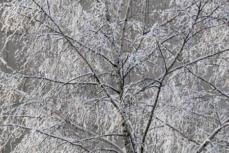 Abstract winter composition. Snow on the tree branches.