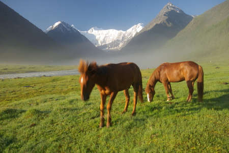 yegua: Horse among green grass in nature. Brown horse. Grazing horses in the village.