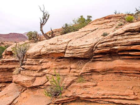Nature National Park, Utah. The landscape and rocks. Roads and propinki Park, Utah. Stock Photo