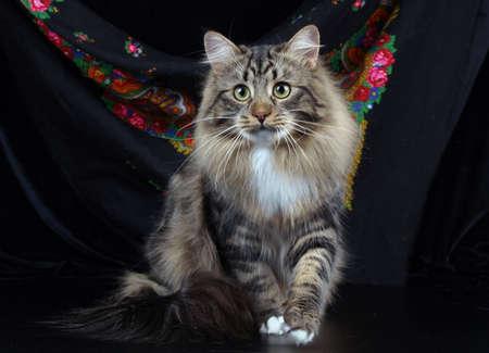 chordates: Cute cats, furry pets and friends. Domestic cat