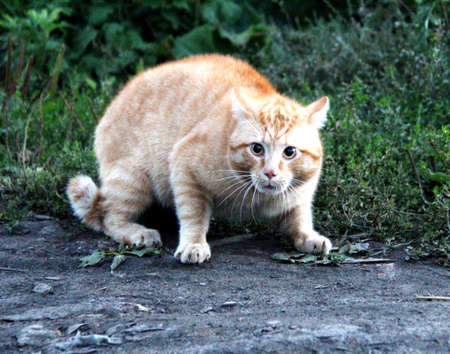 chordates: Spring games pet cats. Favorite pets in our homes. Stock Photo