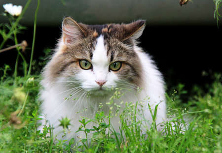 Spring games pet cats. Favorite pets in our homes. Stock Photo