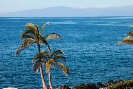 Palm trees on the sea coast. Palm trees on the sea coast