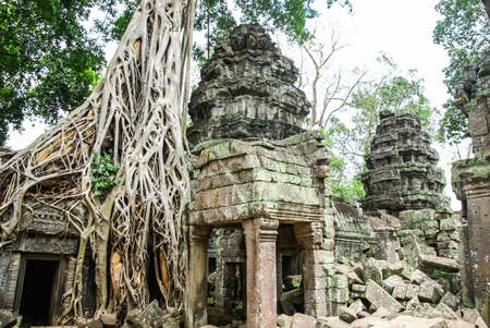 Trees on the ruins of Angkor, jungle come. Stone Gate of Angkor Thom in Cambodia, Siem Reap Angkor Banco de Imagens