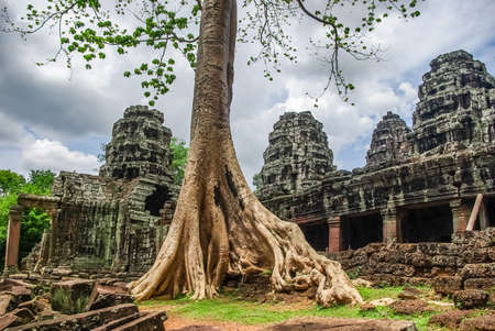Trees on the ruins of Angkor, jungle come. Stone Gate of Angkor Thom in Cambodia, Siem Reap Angkor