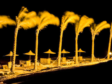 Night on the sea beach and palm trees sway from the wind.