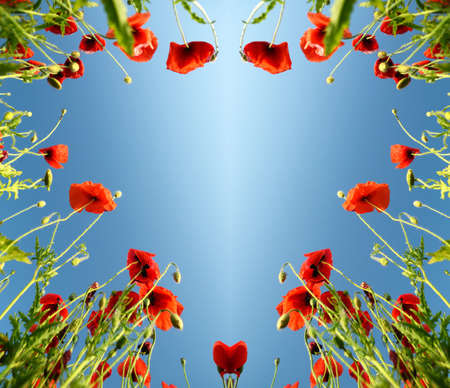 february 14: Valentine as heart with poppies February 14, love