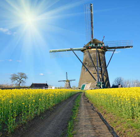 landscape flowers: Beautiful landscape with flowers of rape and Wind Mill