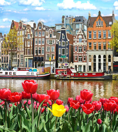 Beautiful landscape with tulips and houses in Amsterdam, Holland (greeting card - concept) Foto de archivo