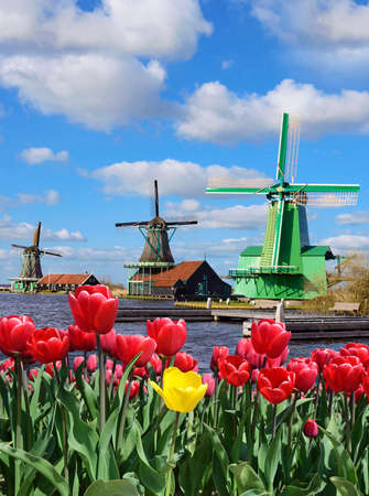 historical romance: Fabulous landscape of Mill and tulips in Holland Stock Photo