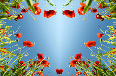 Valentine as heart with poppies (February 14, love) Stock Photo