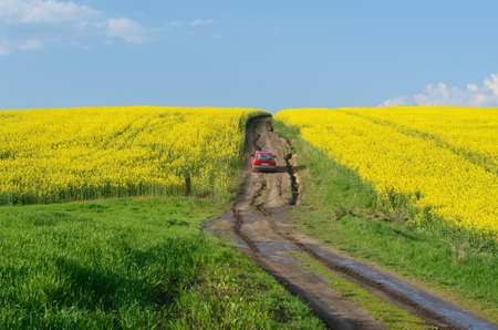 midst: Road to heaven with red car  in the midst of rape field Stock Photo