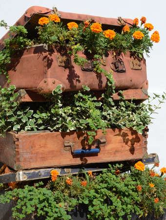 old suitcase: Flower beds in an old suitcase (travel, travel, travel agency, decor - concept)