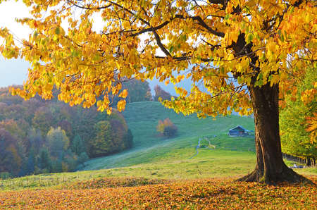 autumn sky: Beautiful landscape with magic autumn trees and fallen leaves in the mountains (harmony, relaxation - concept)