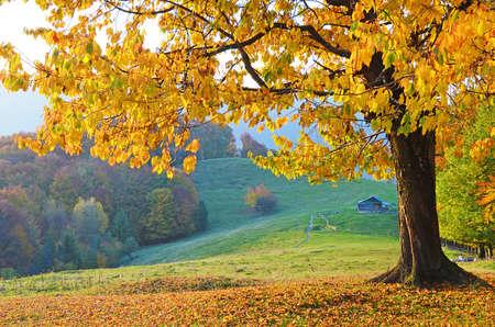 armonia: Hermoso paisaje con �rboles m�gicos de oto�o y las hojas ca�das en las monta�as (armon�a, relajaci�n - concepto) Foto de archivo