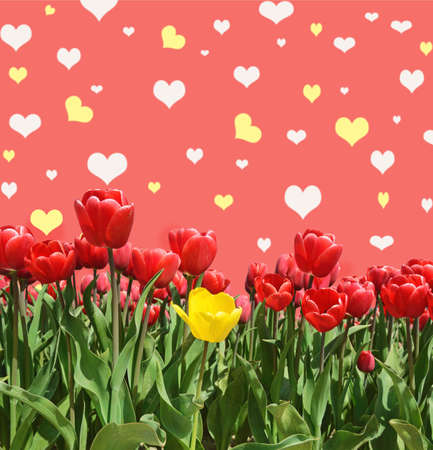 abstrakt: Abstrakt background with tulips for greeting with a Happy Valentine (March 8, February 14).