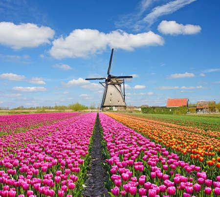 Een magisch landschap van tulpen en windmolens in Nederland. (Ontspanning, meditatie, anti-stress - concept)
