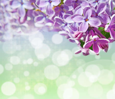 february 14: Abstrackt background with with lilacs for greetings Happy Valentine or wedding in pastel colors with effect bokeh and sparkles (March 8, February 14, Easter).